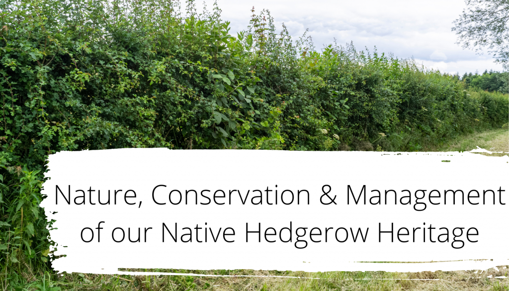 Talk: Nature, Conservation and Management of our Native Hedgerow Heritage